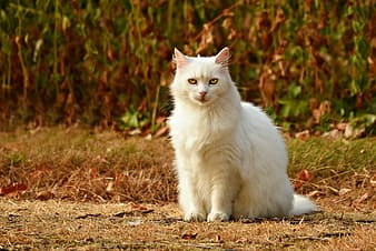 White cat on brown dried grass during daytime