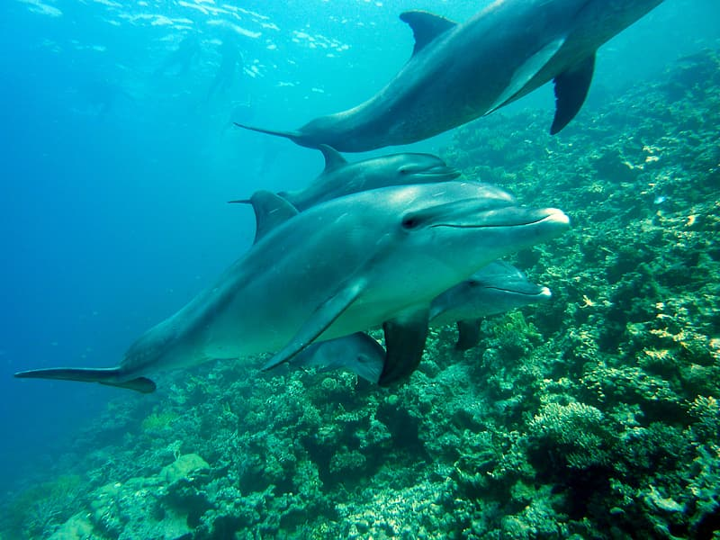 Photo of group of dolphins in sea