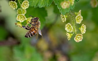 Bee pollinating on green petaled flower