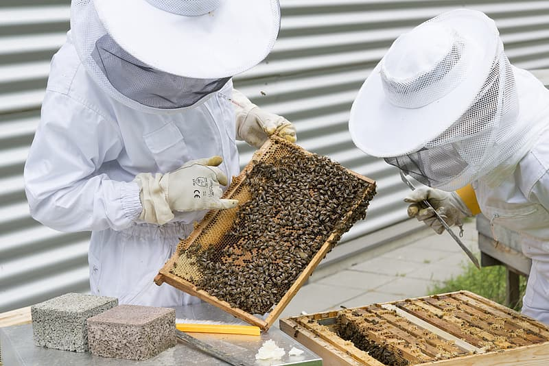 Two men collecting honey