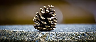Conifer cone on gray surface