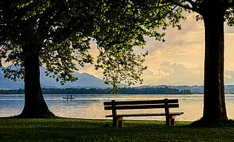 Brown wooden bench near body of water during daytime