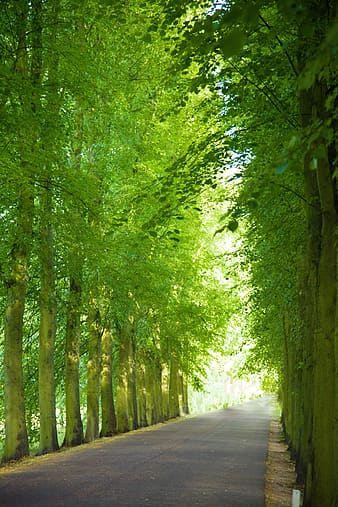 Asphalt road surrounded by green trees during daytime
