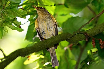 Yellow and black bird on tree branch