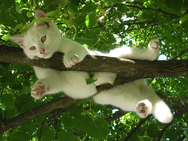 White cat hanged on tree photography during daytime
