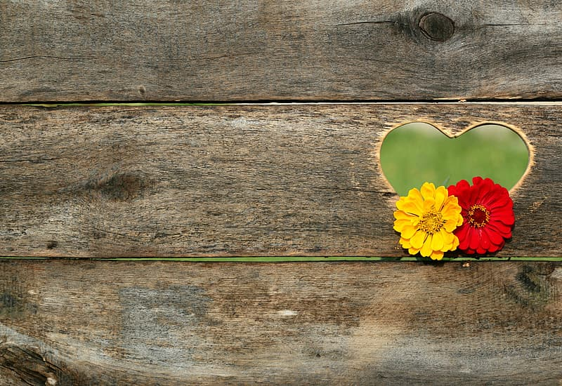 Yellow and red flower hanging on brown wooden board