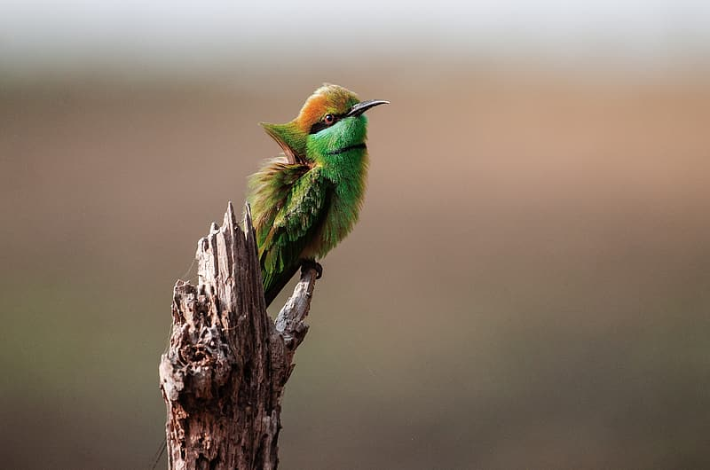 Green and brown bird on tree branch