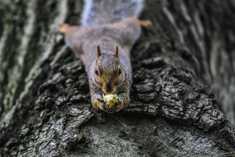Squirrel on brown wood trunk