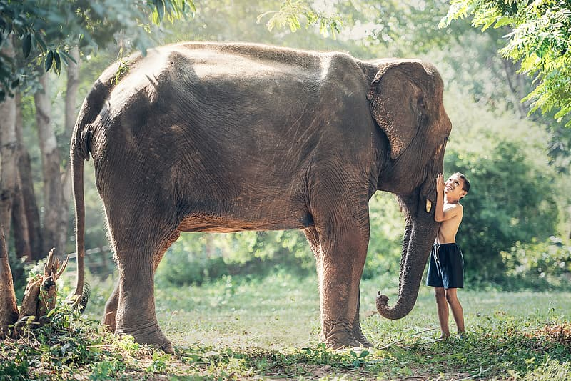 Boy wearing black shorts standing and holding gray elephant's nose on green grass field during daytime