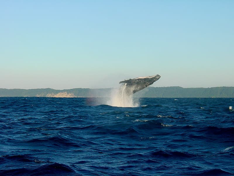 Photo of whale during daytime