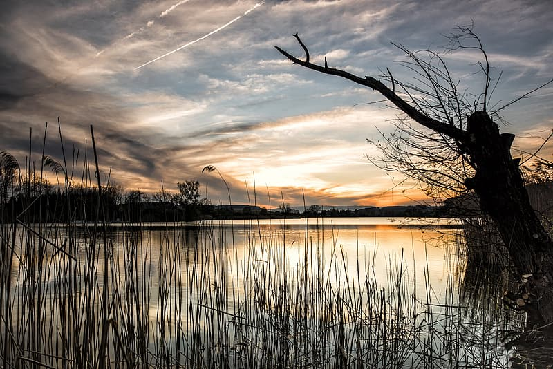 Silhouette photography of lake with tree during golden hour