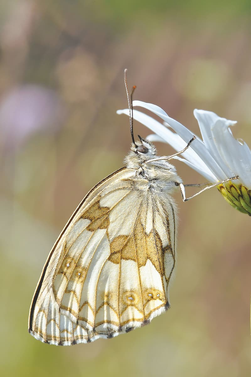 White and brown butterfly on white petaled flower
