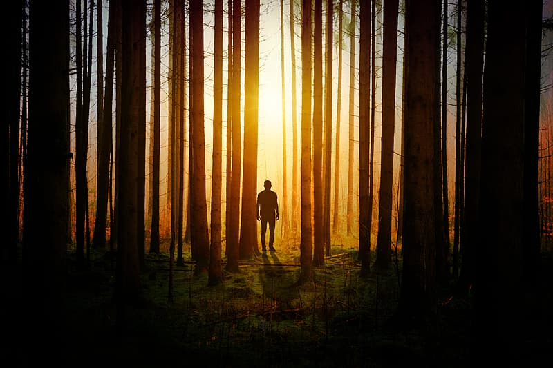 Person near forest during golden hour