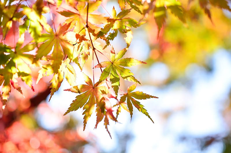Green and red leafed tree