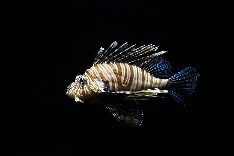 Brown and blue sea fish