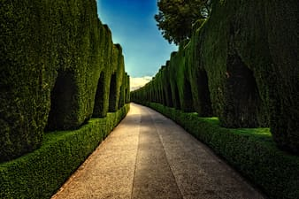 Gray concrete pathway between green trees during daytime