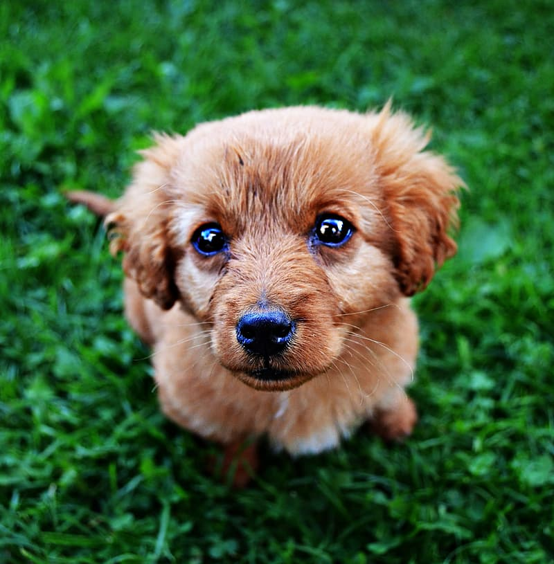 Closeup photography of short-coated puppy on green grass