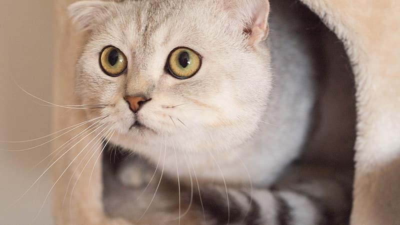 Short-coated white and gray cat on pet bed