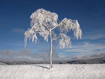 Snow covered tree during daylight