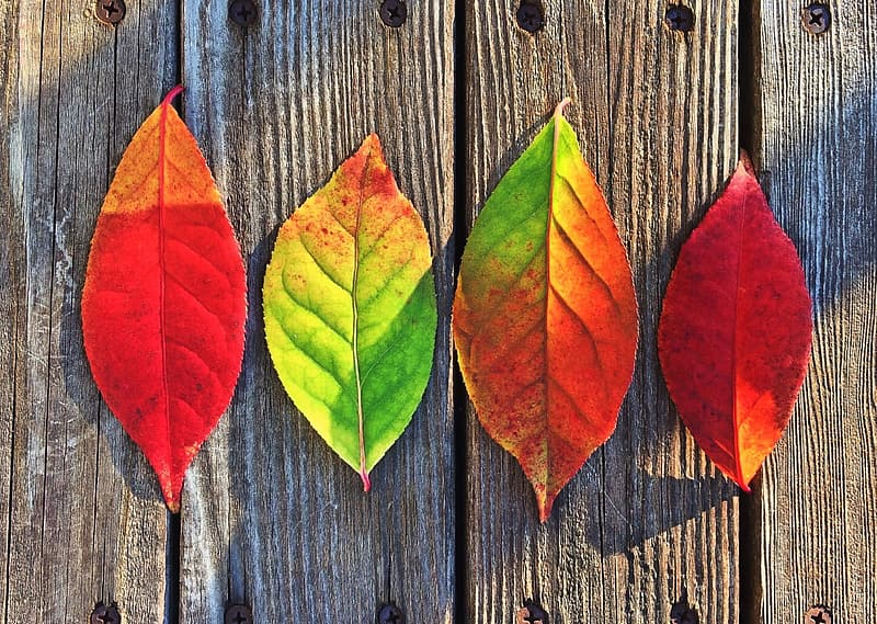 Four assorted leaves