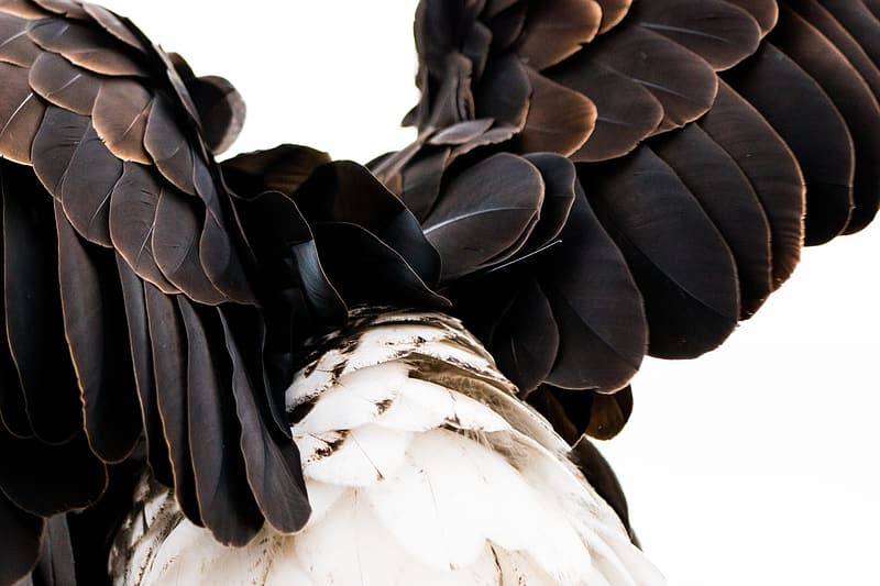 Brown and white feathered bird photo