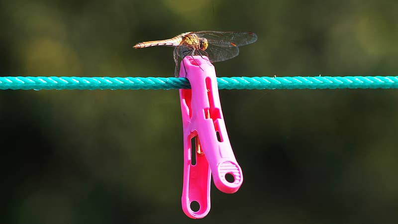 Brown and black dragonfly perched on pink and green stick