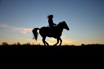 Silhouette photo of person riding a horse