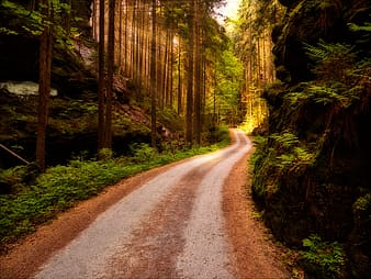 Road near forest during daytime