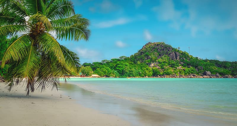 Green palm tree on beach shore during daytime