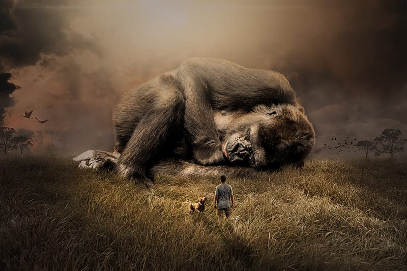 Gray monkey lying down on field painting