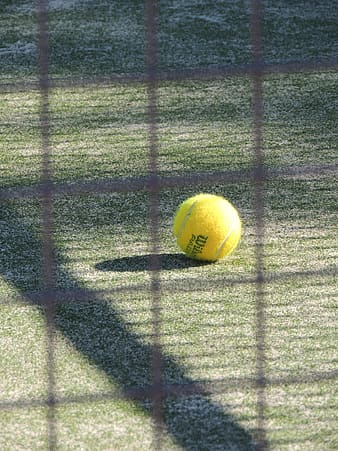 Yellow Wilson tennis ball on green grass