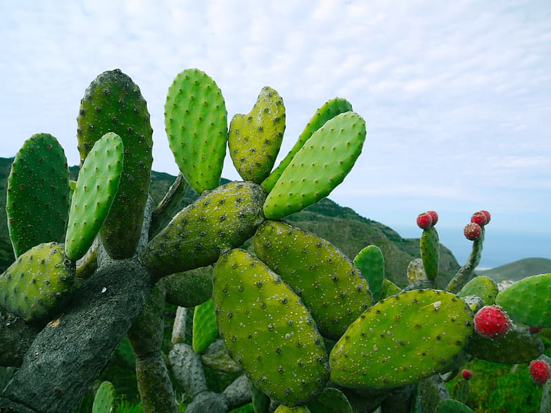 Green cacti under white cloudy sky at daytime