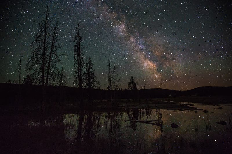 Landscape photograp of trees under the stars during night time
