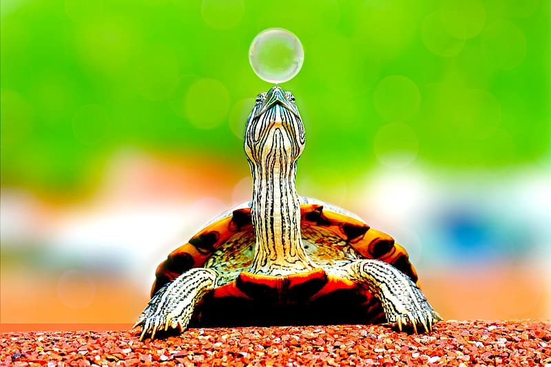 Selective focus photography of turtle near bubble