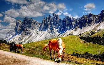 Two brown and one black horses eating grasses with mountain background