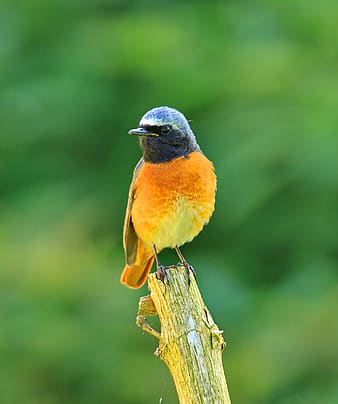 Shallow focus photography of black and orange bird on tree branch