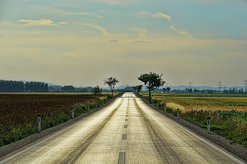 Road surrounded by crops