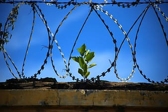 Green plant in the middle of fences
