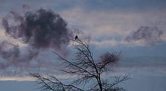 Black bird breach on top of withered tree