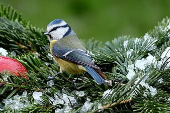 Macro photography of blue and white bird perching on tree branch