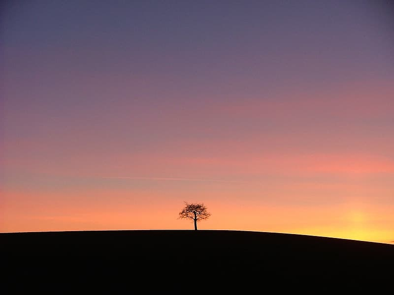 Silhouette of tree during golden hour photo