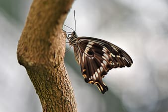 Black and white butterfly perched on brown tree branch