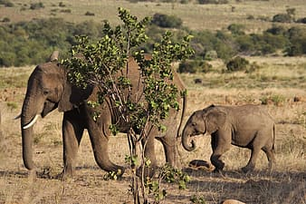 Brown elephant and calf on green grass field during daytime