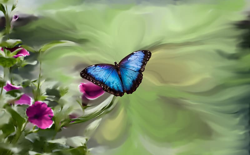 Macro photo of morpho butterfly on pink flower