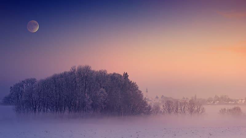Trees on snow covered field during daytime