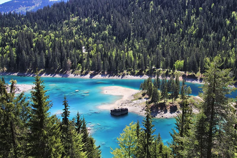 Green pine trees near body of water during daytime