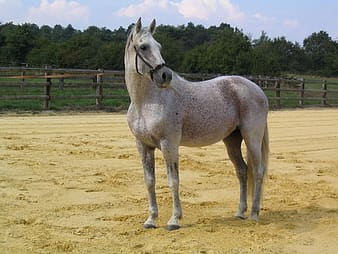 Gray horse on brown sand during daytime