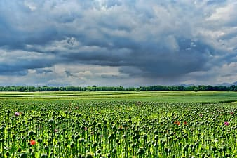 Landscape photography of green plant field