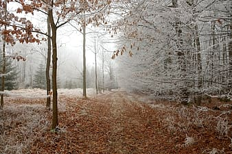 Brown grass and white trees photography