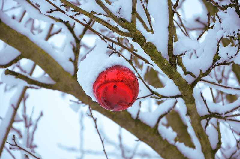 Red bauble on tree stem